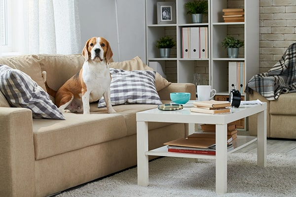 pet-order-control-upholstery-cleaning-wichita-ks
